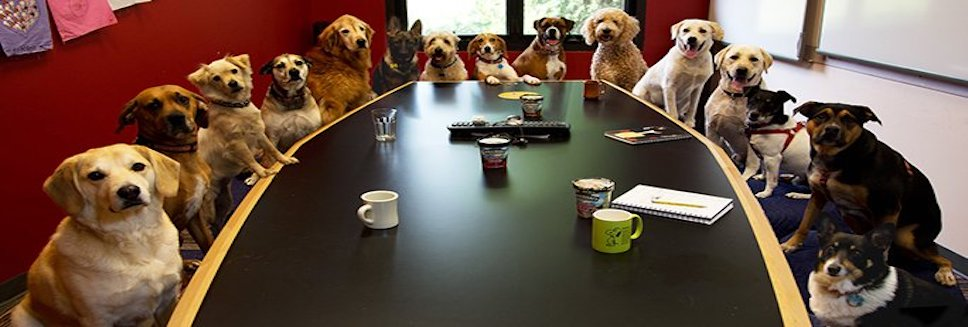 """Meanwhile, at today's meeting on feline healthcare."" - @justinshanes. Spot your Representative?"